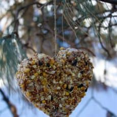 Homemade-Heart-Birdfeeder1.jpg