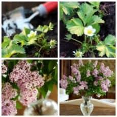 Clorox-to-prolong-flowers.jpg