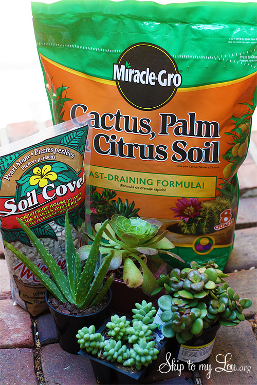 supplies for growing succulents