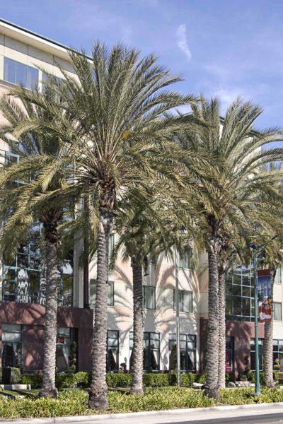 Ramada-Plaza-Anaheim-Anaheim-California.jpg