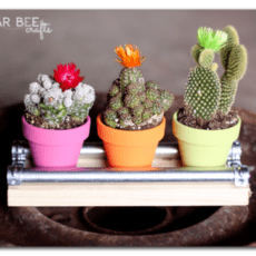 mini-cactus-display-board-e1397504077933.png