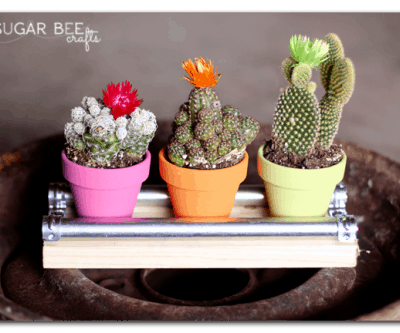 mini-cactus-display-board-e1397504077933.png