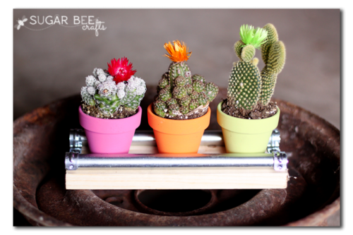 mini cactus display board