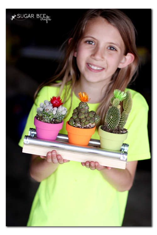 mini cactus teacher gift idea