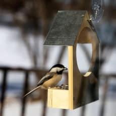 window-birdfeeder.jpg
