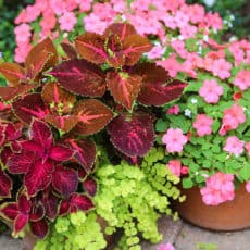 beautiful-container-gardens.jpg
