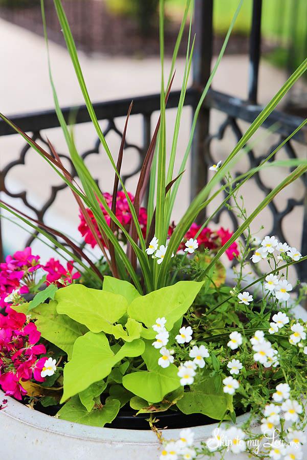 beautiful planter