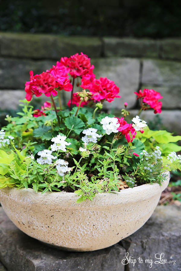 how to plant container flowers