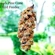 pinecone-bird-feeder-labeled-2.jpg