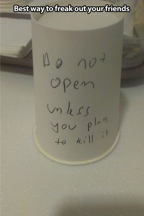 funny-cup-trap-insect