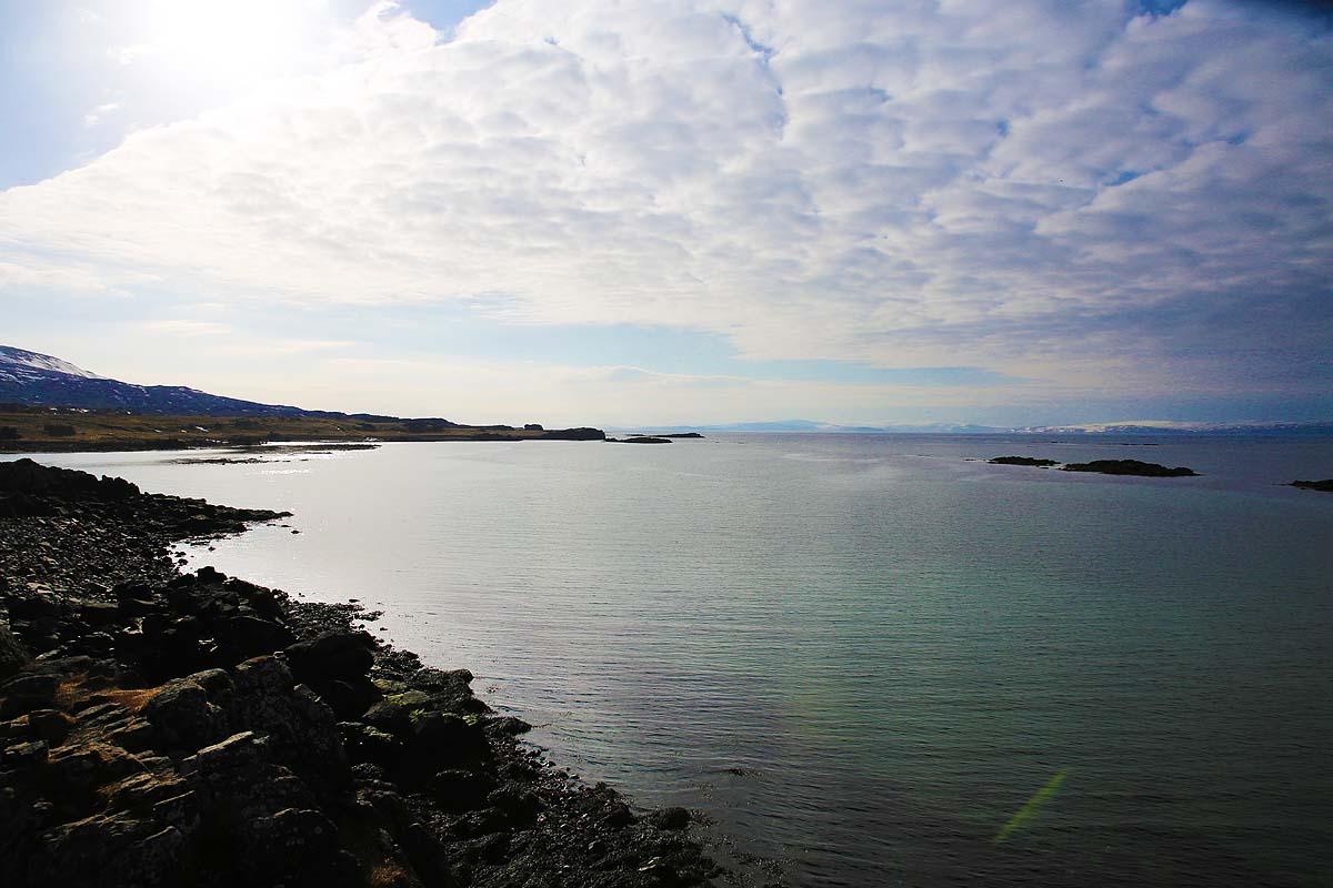 seal spotting iceland