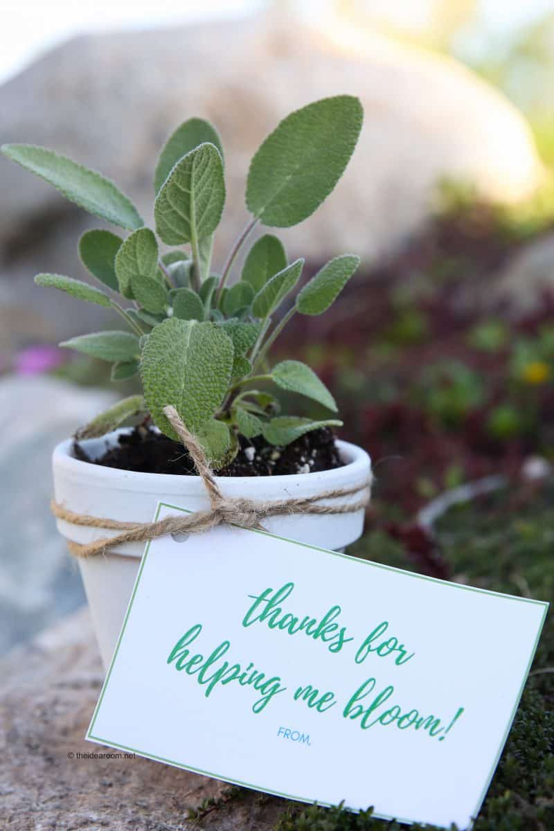 Herb Plants Teacher Gift