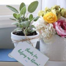 teacher-gift-herbs-theidearoom-8