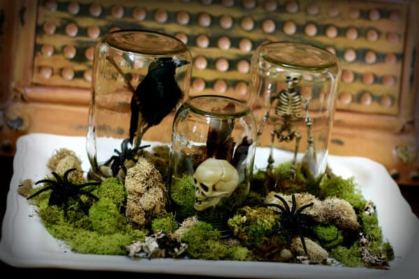 Black crows, skulls, and skeletons encased in mason jars resting on mossy and rocky ground with spiders - mason jar craft