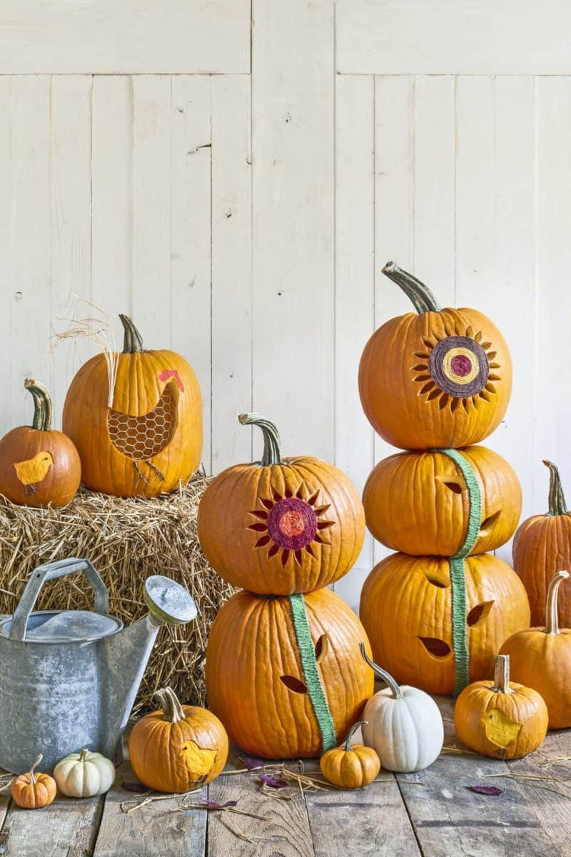 sunflower pumpkins
