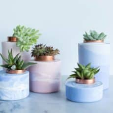 ombre planters