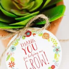 thank you for helping me grow tag on succulent on tera cotta pot