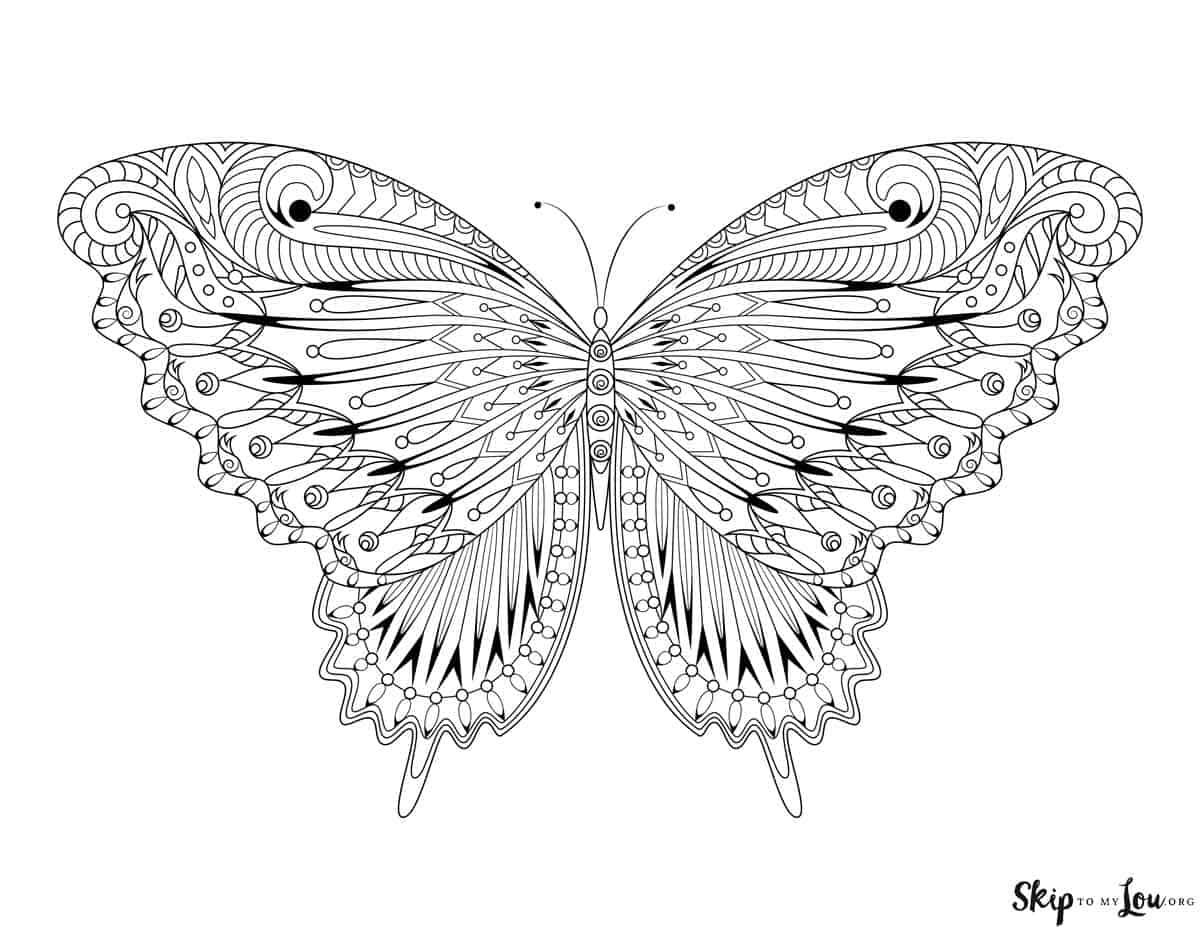 butterfly with intricate design