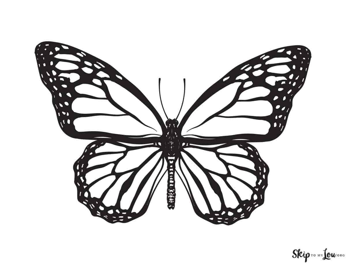 monarch butterfly not colored