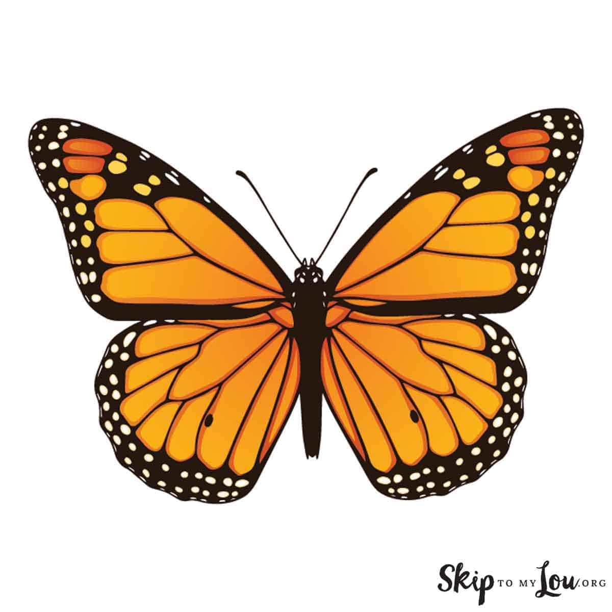 colored monarch butterfly
