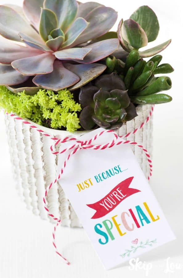 succulents in white pot with gift tag just because youre speical