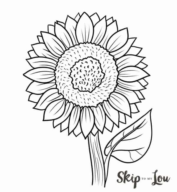 easy sunflower draw black and white illustration