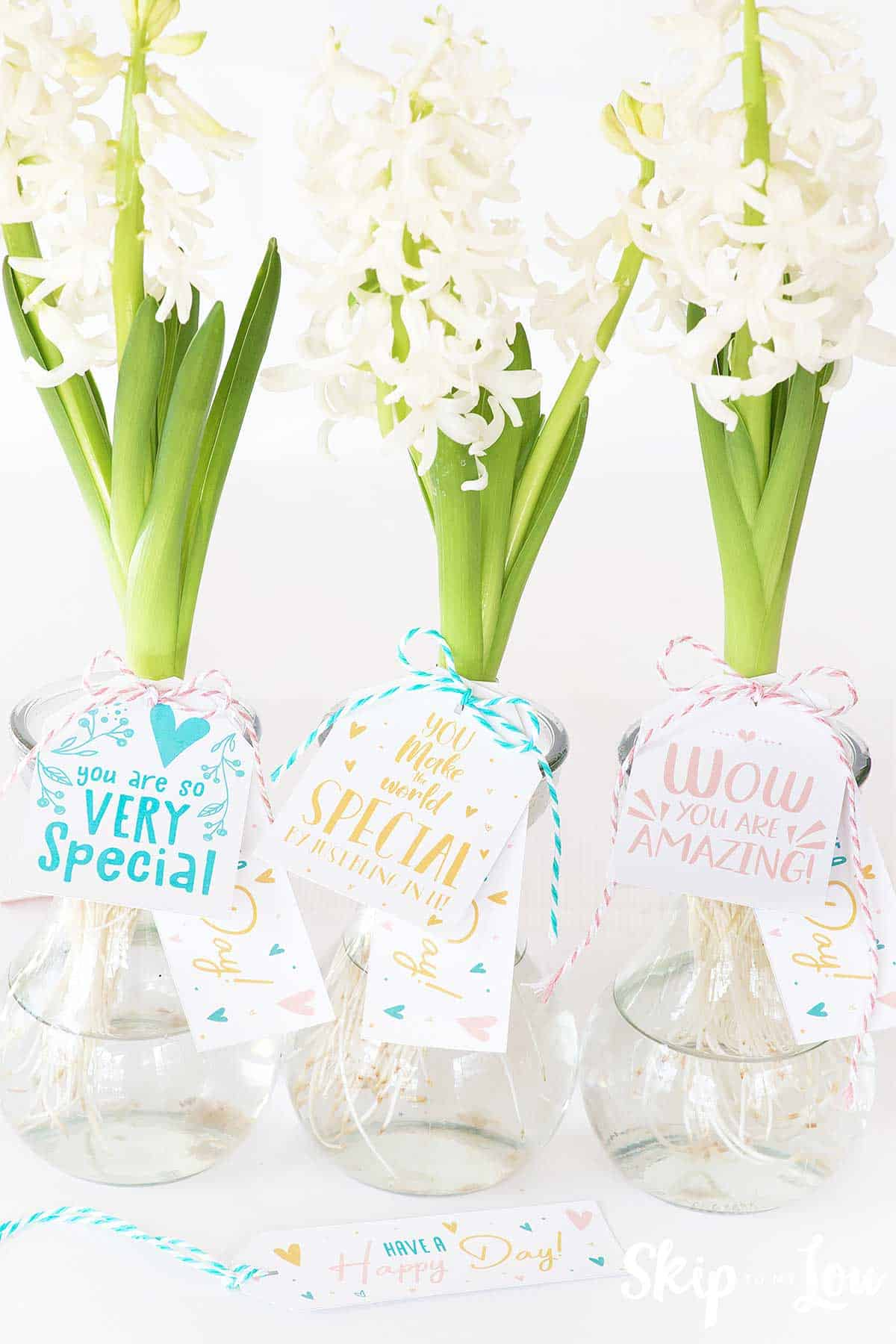 hyacinths in glass vases with gift tags