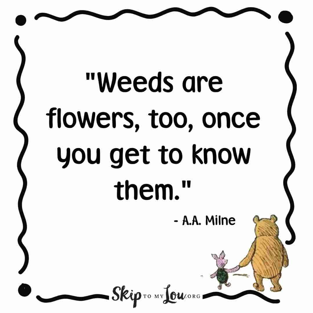 weeds are flowers winnie the pooh quotes
