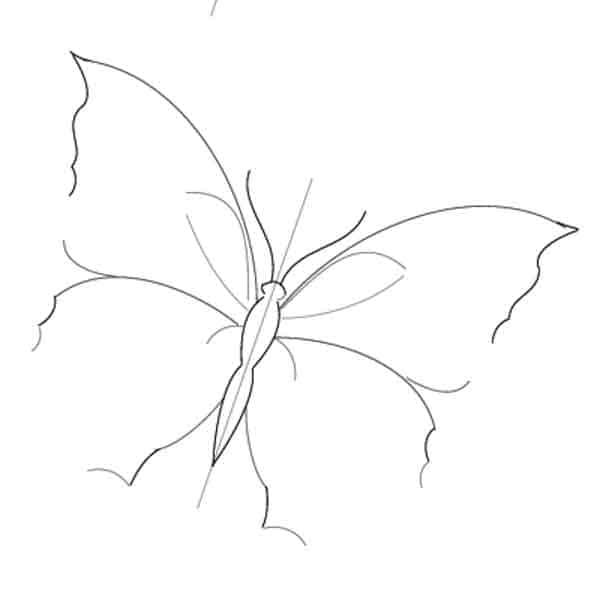 drawing butterfly wings