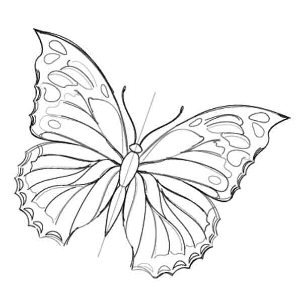 drawing designs on butterfly wings